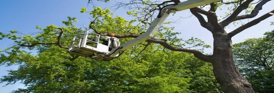 Tailles des arbres et élagage